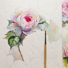 Queen of Sweden rose in watercolor on Behance
