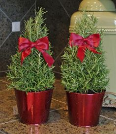 Use topiaries and small, live trees instead of a traditional Christmas tree Rosemary Topiary - Set of 2