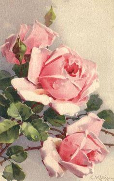 ✿Fragrant Scent Of Roses✿ Catherine Klein ~ pink roses Catherine Klein, Art Floral, Floral Prints, Vintage Flowers, Vintage Floral, Vintage Prints, Vintage Art, Vintage Images, Rosa Rose