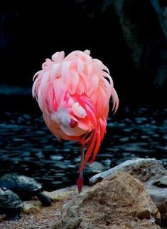 Flamingo Puppy Bed Inspiration.                     A sleeping pink flamingo.  Beautiful!
