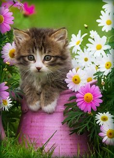 Cute animals know how to get what they want! Beautiful Kittens, Pretty Cats, Animals Beautiful, Pretty Kitty, Beautiful Beautiful, Kittens And Puppies, Cute Cats And Kittens, Kittens Cutest, Cute Baby Cats