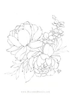 Flower Drawings – Spring 2019 Beautiful peony illustration featuring two large blooms and a few other delicate botanicals within the bouquet. Learn to draw beautiful illustrations like this by taking the Floral Drawing Challenge by Blushed Design. Rose Illustration, Illustration Botanique, Floral Illustrations, Botanical Illustration, Flower Line Drawings, Flower Sketches, Art Drawings, Beautiful Flower Drawings, Outline Drawings