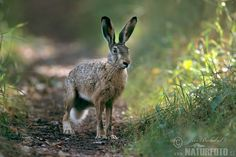 Rob Auty - 'A Hare's Tale' Book Series