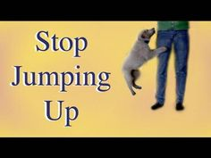 How to stop your puppy jumping up! - YouTube
