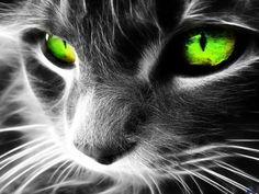 BECAUSE CATS ARE ALWAYS STYLISH PERCHÉ I GATTI SONO SEMPRE STYLISH Сочал, артисты и поэты всегдà полюбили кота. A для кого хочет есть кофе  окружать их.