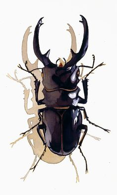 """""Odontolabis d. subita"" Stag Beetle Watercolor"" by Paul Jackson 