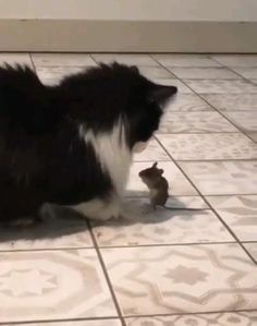 Funny Animal Jokes, Funny Cute Cats, Funny Animal Videos, Cute Funny Animals, Cute Baby Animals, Animals And Pets, Cute Dogs, Cute Animal Photos, Funny Animal Pictures
