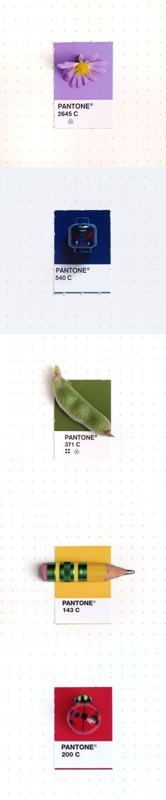 """Designer Inka Mathew color codes the trinkets in her life according to her Pantone Matching System swatch book for a personal project she calls """"Tiny PMS Match""""."""