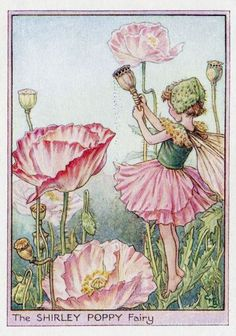 The Shirley Poppy Fairy, by Cicely Mary Barker