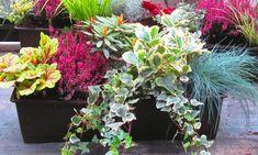 Balkonpflanzen-Set für Balkonkasten 60 cm lang
