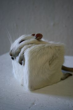 rat cube by edelias.deviantart.com on @DeviantArt