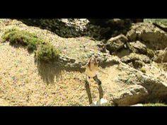 Malú - Diles (Videoclip)