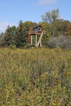 my dad built this hunting stand using 4 high line poles. i requested the deck. i hope to paint from up there one day...no animal carnage from me. (my photo.)