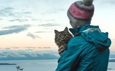 13 Tips For Traveling with a Cat (Plus Adorable Kitty Pics)
