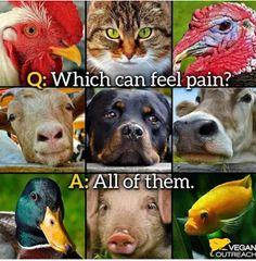 Go vegan cruelty-free #vegan #crueltyfree