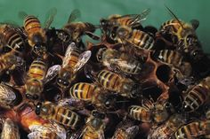 In general, if at all possible, you should avoid killing ground bees. There are several varieties of bees that live in the ground, and they are all good for the soil. They eat grubs, aerate the soil and pollinate wild flowers. However, if the ground bees inhabit an area where children play or you...