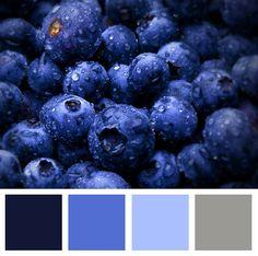 Blueberry colour palette #colours #graphicdesign #design #colourinspiration #colourpalette #blueberries #blueburycreative