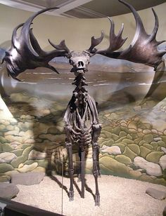 deer skeleton front view - Google Search