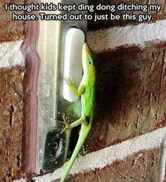 Savage gecko
