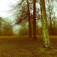 Who loves #walking in rainy #fog #trees #spirituality