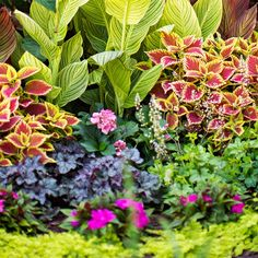 Plants prime for shade include cannas, coleus, coralbells, New Guinea impatiens and creeping Jenny.