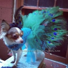 Coolest Homemade Peacock Costume for Pet Dog... This website is the Pinterest of costumes