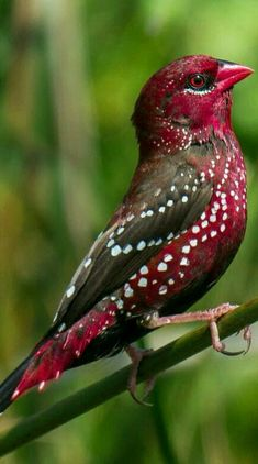 I just ADORE this beauty's cranberry & brown feathers!!