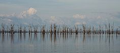 Dawn Broom - Classic Lake Kariba