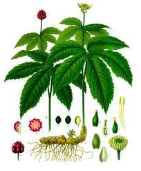 Key attributes of homeopathic single remedy Hydrastis Canadensis are Alcoholism, Catarrh, Constipation, Haemorrhoids, Leucorrhoea, Liver Affections. http://www.rxhomeo.com/pharmacy/homeopathic.php?act=viewProd&productId=271&pName=HYDRASTIS+CANADENSIS