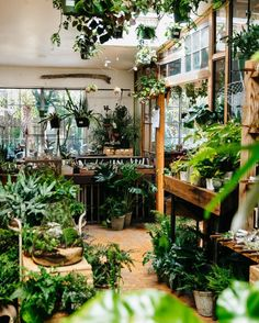 Greenhouse                                                                                                                                                                                 More