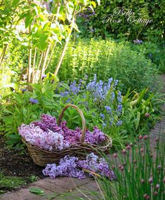 Bella's Rose Cottage: Love of Lilacs...