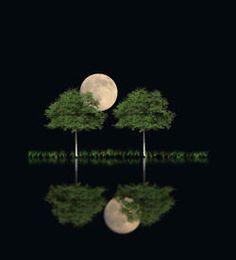 moon, trees