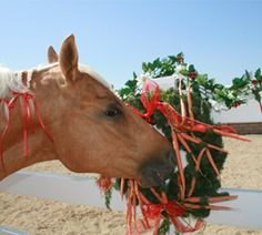 Share holiday fun with your favorite horse by creating an easy and decorative carrot wreath.