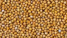 How applying mustard seed oil helps to increase circulation and drain lymph for reduced water-retention and cellulite Mustard Oil, Mustard Seed, Psoriasis Treatment Cream, Cellulite Oil, Water Retention Remedies, How To Make Oil, Herbal Oil, Organic Oil, Natural Healing