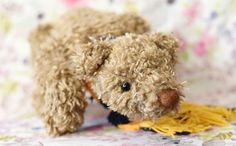 Sunday is one of the biggest artist bears that I have ever made, He is so cuddly with his extremely curly fur and has been sewn to mimic a real bear walking along and sniffling along the ground for food. He is a hungry bear and does like his food. He has a very lovely black and yellow