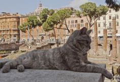 The Roman Cat Sanctuary, Largo di Torre Argentina. Open daily from noon until 18:00.