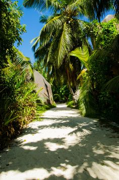 Palm forest on the island of La Digue @Miranda Jones by Florent Desmis on 500px