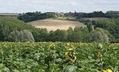 Vue des champs de l'Indre (36)