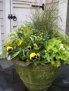 Pansies add color to fall containers and last until frost.  earthgardenflowers.com