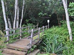 Okolehao Trail Hike - Hanalei Kauai, Hawaii | Kauai.com