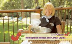 How to Grow Cereal Grains at Home with a10x10 plot will yield enough for half a year's worth of bread making.www.GrowOrganic.com  http://groworganic.com/organic-gardening/videos/how-to-grow-cereal-grains-at-home