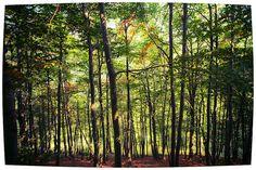 #Oasi #Zegna, Il #Bosco del #Sorriso - #Forest of #Smiles. www.oasizegna.com