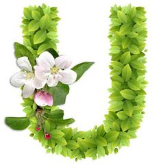 Abecedario con Hojas Verdes y Flores Blancas. Alphabet with Green Leaves and White Flowers. Alphabet Art, Alphabet And Numbers, Letter Art, Flower Names, Flower Art, Candyland, Doodle Icon, Picture Letters, Embroidery Letters