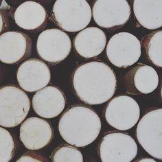 Cassava / Maniok / Yuca (Manihot Esculenta) #pattern #learnspanish #learningspanish #deutschlernen #lernendeutsch #learningenglish #learnenglish #español #fruits #vegetables #natur Texture, Wood, Instagram, Learn German, Nature, Surface Finish, Woodwind Instrument, Timber Wood, Trees