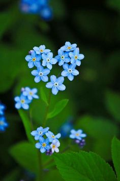 Forget me nots, which actually are in a heart shape!!
