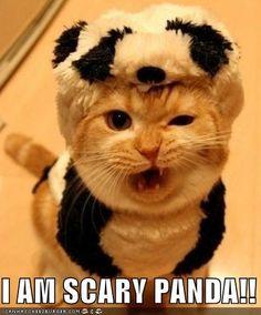 I AM SCARY PANDA!!
