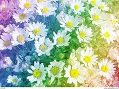 Image result for daisies background