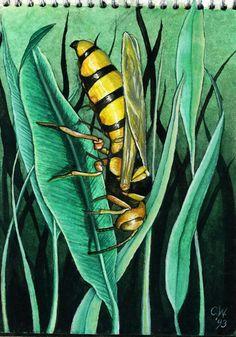 Yellow jacket- Watercolor on paper  ©Carolyn Watson Dubisch