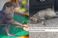 18 Heartwarming Tweets About Animals That Will Make Your Day 100% Better