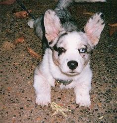 My Sweet Dog Tia as a baby!